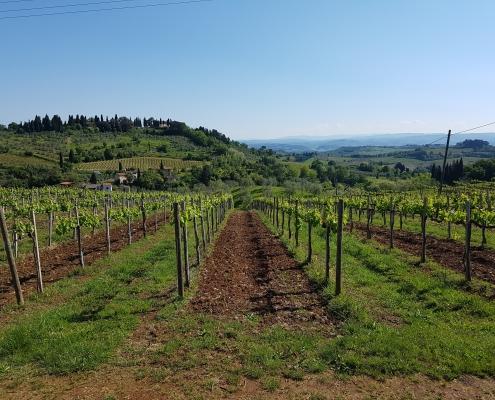 vignoble Chianti Toscane Italie Voyage