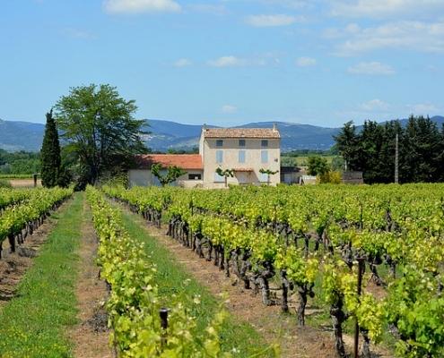 Vignoble Provence France Europe Voyage