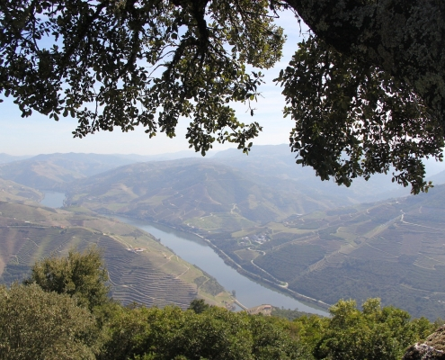 Vallée du Douro Portugal Europe Voyage
