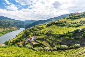 Vignobles Douro Portugal Europe Voyage